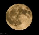 moonshots-346